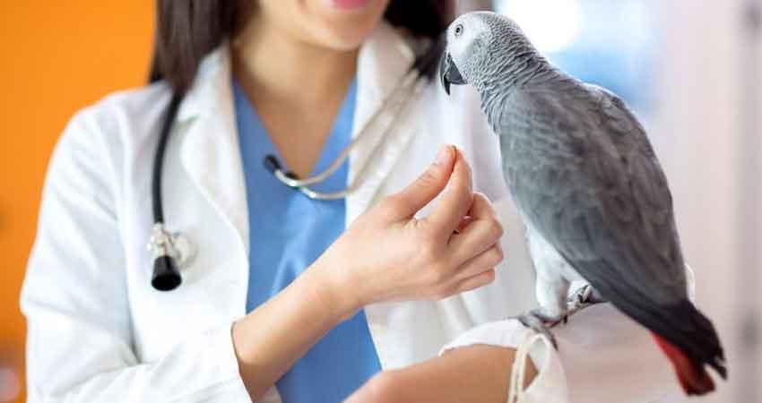 Malattie Uccelli