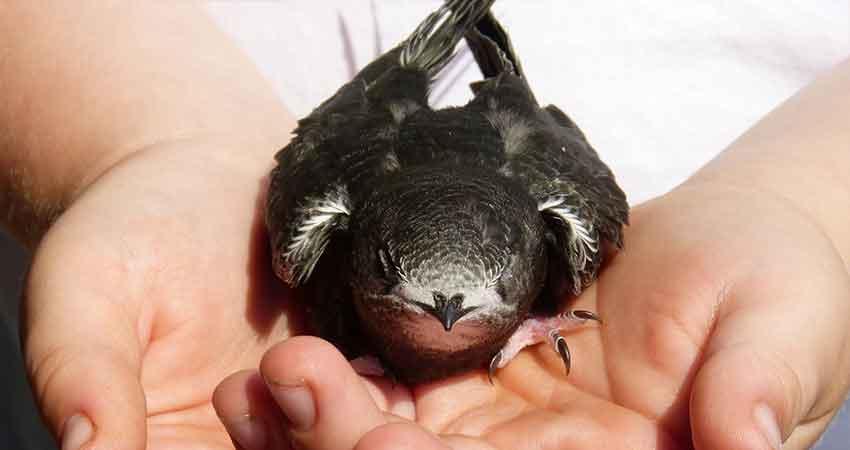 Storia di ninì, un rondoncino caduto dal nido