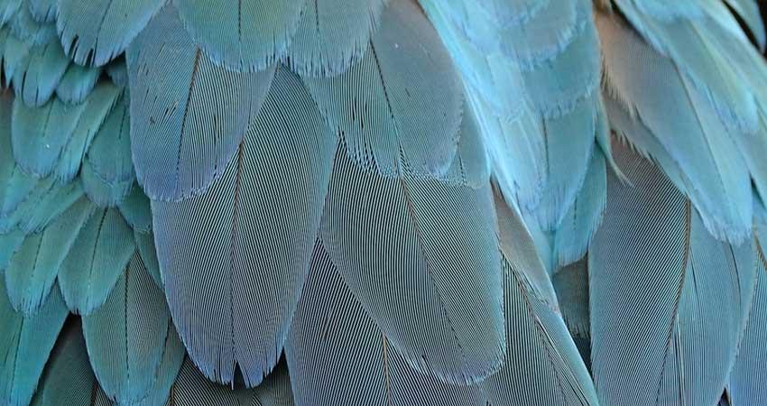 Muta Uccelli