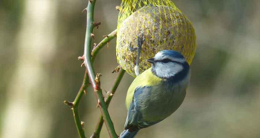 Esperienza di bird feeding in terrazzo