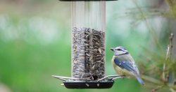 Uccelli da birdgardening: Cince o Paridi