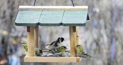Uccelli da birdgardening: introduzione