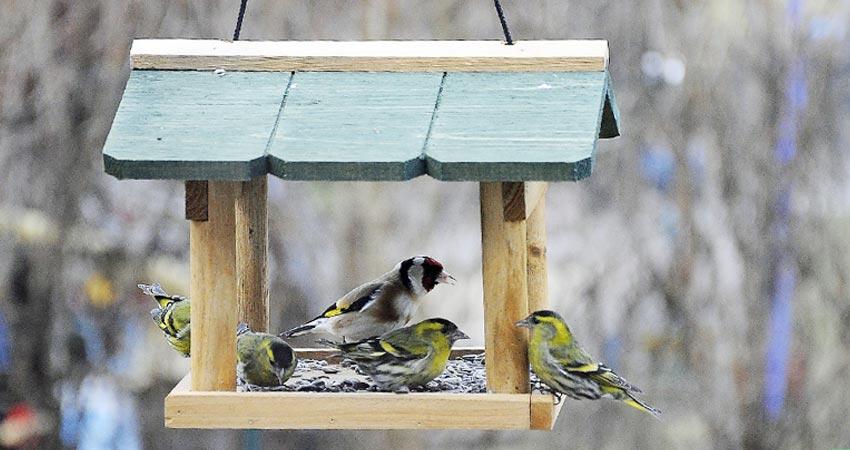 uccelli da birdgardening