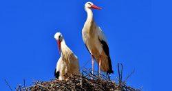 Birdwatching a portata di autostrada