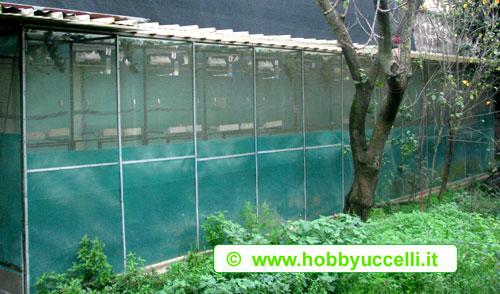 Scorcio esterno del box di volierette utilizzate durante la riproduzione per l'allogiamento delle coppie di cardellini. Foto: Hobby Uccelli