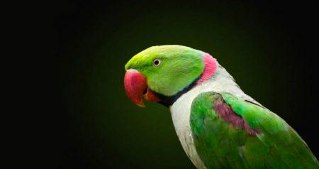 Intervista ad Ivana Coniglione allevatrice di pappagalli