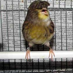Pic del mio uccello