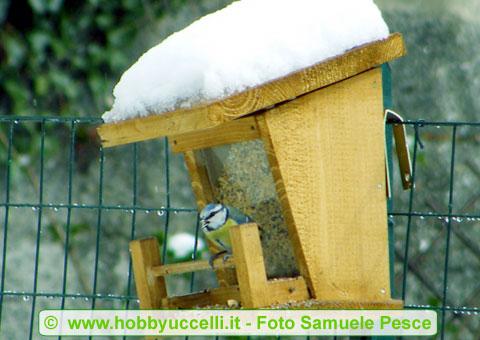 Mangiatoia a tramoggia autocostruita - Foto Samuele Pesce