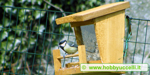 Una Cinciallegra che mangia da una mangiatoia da birdgardening