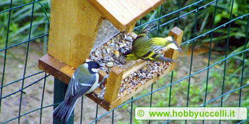 Nella foto una cinciallegra (Parus major) e un lucherino (Carduelis spinus) durante un pasto consumato da una mangiatoia a tramoggia a base di un misto di semi. Foto: Samuele Pesce