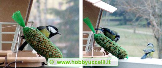 cinciarelle e le cinciallegre sono gli uccelli che maggiormente amano nutrirsi dalle mangiatoie