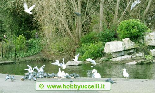 Phoenix Park a Dublino è uno dei parchi recintati e cittadini più grandi d'Europa. Foto: Dario Dell'Anno