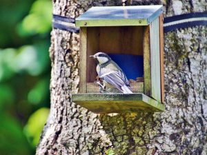 Cinciallegra mentre mangia da una mangiatoia per uccelli selvatici posizionata sul tronco di un albero