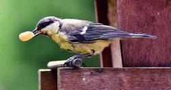 Raccolta fotografica di mangiatoie per uccelli selvatici