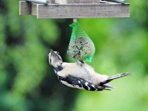 In inverno basta davvero poco per aiutare gli uccelli selvatici.