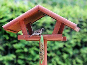 Passero su una mangiatoia per uccelli posizionata in giardino