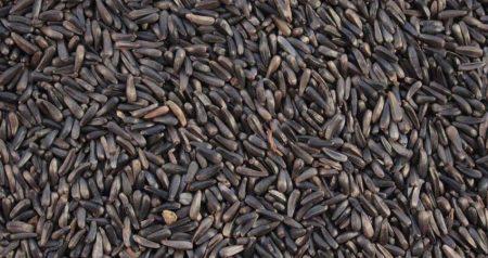 Il seme di Niger