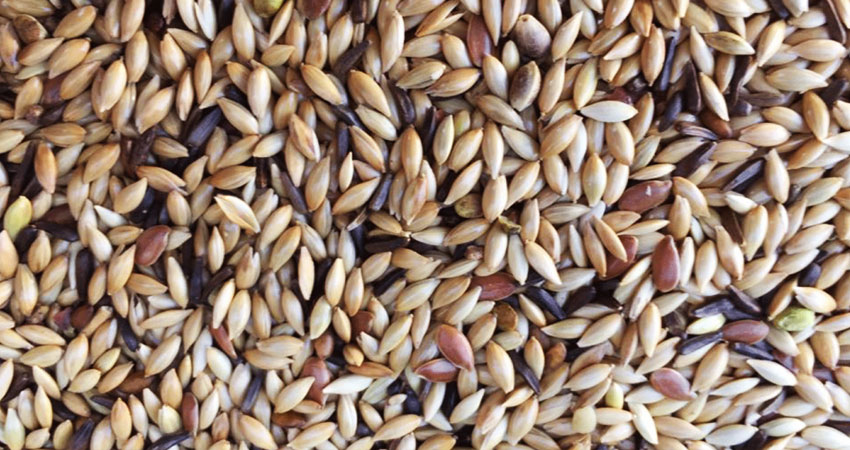 Miscele semi per uccelli domestici