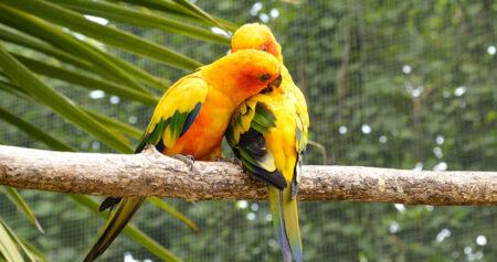 I posatoi per uccelli